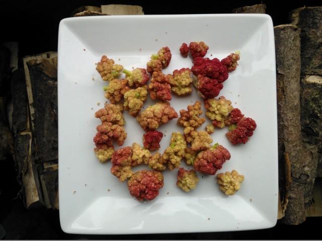 rhubarb flowers