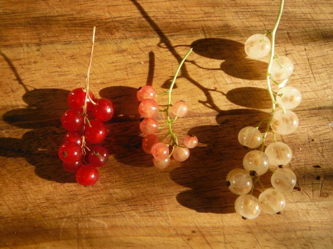 Red, pink and white currants