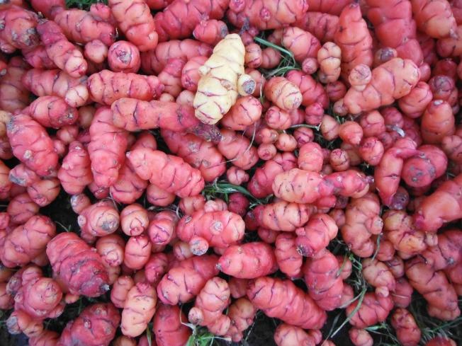oca crop